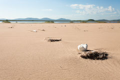 Various garbage on the sandy seashore thrown ocean waves. Yellow sand and blue sky. Wide angle. Royalty Free Stock Images