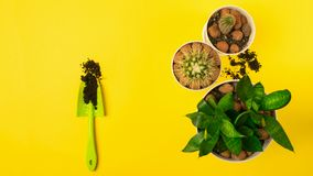 Various garden accessories tools and plants in pots on a yellow bright background. Spring concept. royalty free stock photos