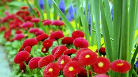 Various garden flowers in the garden. Using the slider stock video footage