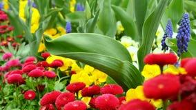 Various garden flowers in the garden. Using the slider stock video