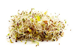 Various germ sprouts Royalty Free Stock Photos