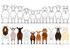 Various goats border set. Various goats in a row, domestic  goats border with and without colors set stock illustration