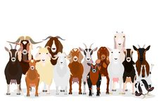 Various goats group. Domestic  goats with colors set on white stock illustration