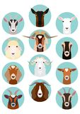 Various goats head icon set. Various goats heads in a circle, domestic  goats heads icon set royalty free illustration