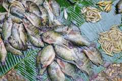 Various goods in Burmese market , Myanmar. Fresh fishes in Burmese market, Myanmar. In Myanmar, eggshells are used for plants to protect plants from some insects stock photo