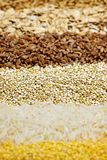 Various grains close up Royalty Free Stock Photography