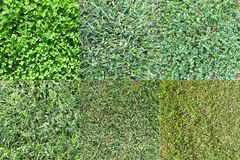 Various Grass types 2 Stock Images