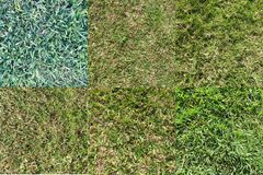 Various Grass types 1 Royalty Free Stock Image
