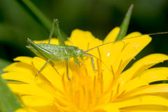 A various grasshopper macro Stock Photo