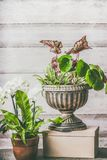 Various green home plants and flowers in pot and planting urn on table at wooden wall background Stock Image