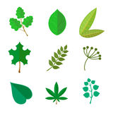 Various green leaves set Royalty Free Stock Image