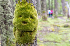 Various green mosses and lichens Royalty Free Stock Photography