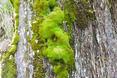 Various green mosses and lichens Stock Photography