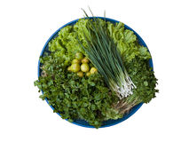 Various of green vegetable Stock Image