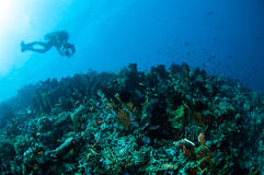 Various hard coral reefs in Gorontalo, Indonesia. Stock Photography