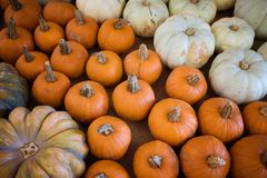 Various Harvest Pumpkins royalty free stock photography