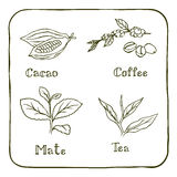 Various herbals - coffee, mate, cacao and tea Stock Images