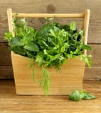 Various herbs (basil, thyme, parsley, mint and dill) Stock Photos