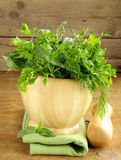 Various herbs (basil, thyme, parsley, mint and dill) Stock Photography