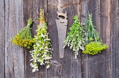 Various herbs bunches on wooden wall Stock Photos