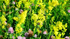 Various herbs and flowers on meadow close-up, Russia stock footage