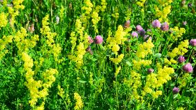 Various herbs and flowers on meadow close-up, Russia stock video footage