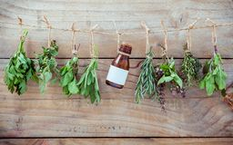 Various herbs hanging on shabby wooden background.  Parsley ,ore Stock Photography