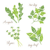 Various herbs illustration Royalty Free Stock Images