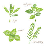 Various herbs illustration Stock Photography