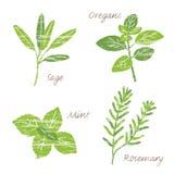 Various herbs illustration Stock Photography