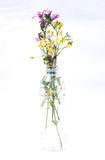 Various herbs Royalty Free Stock Image