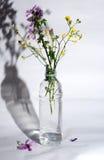 Various herbs Stock Photography