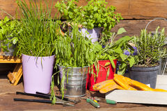 Various herbs in pots Royalty Free Stock Photo