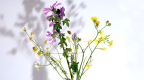 Various herbs Stock Image