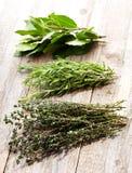 Various herbs Stock Photos