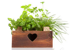 Various herbs in wooden vintage crate. Stock Photo