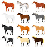 Various horse colors. Set of nine horses with different coat colors vector illustration