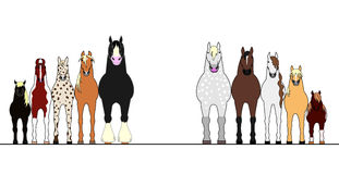 Various horses lining up in height order Royalty Free Stock Photos