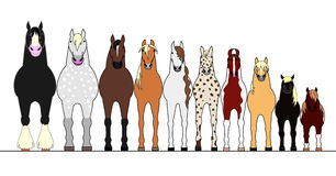 Various horses lining up in height order Royalty Free Stock Image