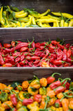 Various hot peppers. A selection of hot peppers for sale at the farmer's market Royalty Free Stock Images