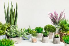 Various house plants in different pots against white wall. Copy space stock image