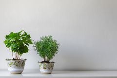 Various house plants in different pots against white wall. Indoor potted plants background with copy space. Modern room decoration royalty free stock photography