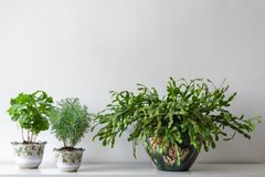 Various house plants in different pots against white wall. Indoor potted plants background with copy space. Modern room decoration stock photography