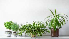 Various house plants in different pots against white wall. Indoor potted plants background. Modern room decoration. Various house plants in different pots stock photo