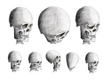 Various human skulls Royalty Free Stock Photography