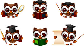 Various illustration of owl Royalty Free Stock Photos