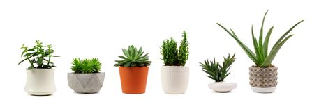 Free Various Indoor Cacti And Succulents In Pots Isolated On White Stock Photography - 117477252