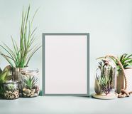 Various indoor plants and cactus in pots around blank white frame mock up on modern desktop background. Succulent plants concept. royalty free stock images