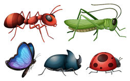 Various insects and bugs. Illustration of various insects and bugs on a white background Stock Photo