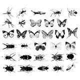 Various kind of insects Stock Images